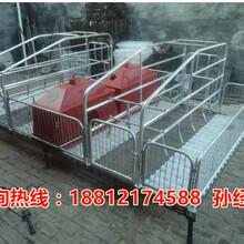 厂家直销桂林养猪设备母猪产床出售新型母猪产床批发图片