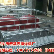 广西南宁母猪产床厂家批发猪产床尺寸大全优质养猪设备报价图片