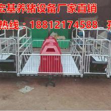 母猪产床销售宏基母猪产床价格实惠猪产床配套设备专业生产厂家图片