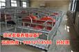 四川养猪设备河北母猪产床产床生产厂家供应猪用分娩栏出售
