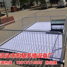 广西三元猪仔保育床的尺寸设计多大合适呢小猪保育床规格齐全泊头宏基图片