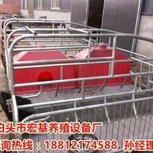 供应陕西养猪设备母猪产床销售猪用分娩床出售高培产仔栏报价图片