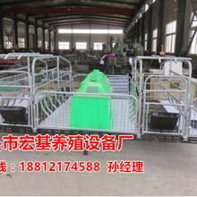 供应广元母猪产床厂家生产销售猪舍常用母猪产仔栏尺寸齐全宏基图片