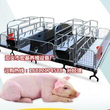 辽宁养猪设备母猪产床尺寸齐全猪产床规格齐全母猪产床批发图片