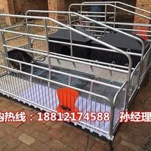 内蒙古母猪产床厂家供应猪用分娩栏尺寸出售猪床规格齐全图片