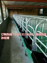 猪用限位栏带漏粪地板定位栏生产厂家优质养猪设备规格齐全图片