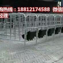 浙江猪用限位栏一套多少钱?最便宜的养猪设备专业生产厂家宏基图片