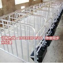 资阳母猪限位栏厂家直销专业生产猪用定位栏母猪保胎栏价格图片
