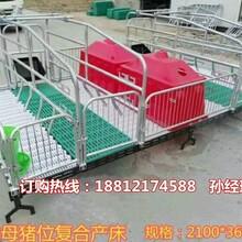 出售母猪产床价格多少钱四川养猪设备母猪产床厂家供应图片