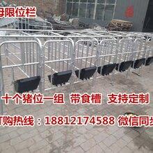 江苏养猪设备生产销售十个猪位的定位栏一套多少钱图片