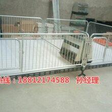 陕西仔猪活动床尺寸齐全小猪保育床厂家供应养猪设备供应商图片