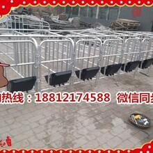 新疆額敏縣養豬設備生產銷售十個豬位的定位欄一套多少錢圖片