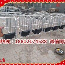 新疆额敏县养猪设备生产销售十个猪位的定位栏一套多少钱图片