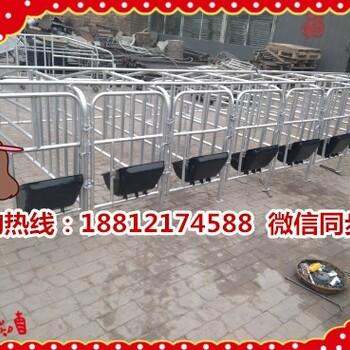 新疆额敏县养猪设备生产销售十个猪位的定位栏一套多少钱