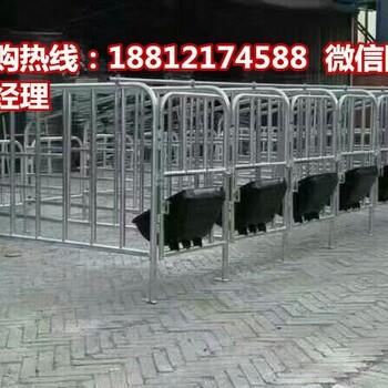 内蒙古猪用限位栏生产销售一组十个猪位的定位栏厂家供应