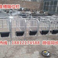 百色猪用限位栏厂家供应带食槽定位栏尺寸齐全养猪设备批发图片