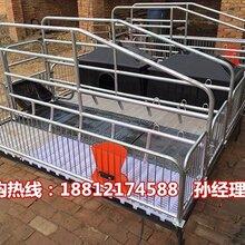 甘肃母猪分娩栏厂家批发定西分娩栏尺寸齐全母猪产床供应商图片
