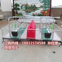 四川豬產床廠家巴中母豬分娩欄價格養豬設備批發圖片