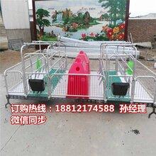 四川猪产床厂家巴中母猪分娩栏价格养猪设备批发图片