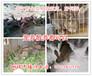 沈阳哪里有獭兔养殖场,辽宁獭兔养殖基地