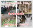 贵州遵义哪里有养兔场,贵州杂交野兔养殖基地图片