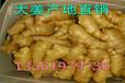生姜大姜批发价格便宜