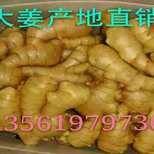 生姜大姜批发价格便宜图片