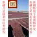 廣州市高品質新疆和田大棗多少錢一斤特級紅棗每個家庭的首選