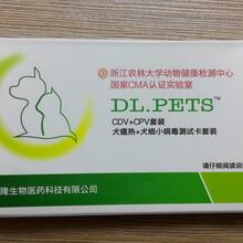 宠物疾病检测卡宠物病快速检测卡病毒抗原专用