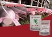 ?#20849;?#22686;长王---仔猪类原线虫病怎样进行疫病防控保健?
