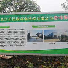 芷江黑水虻养殖、高产养殖技术、种虫供应图片