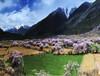 你不懂的别样美景—西藏林芝