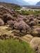 2017年雪域高原下的林芝桃花,赏索松村美的世界