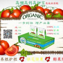 高硼高鈣高鉀寶一步到位水溶肥膨果增甜防裂高產西紅柿黃瓜茄子等沖施效果好廠家直銷