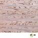 华椢H.K天然建材RD-N208电视背景墙墙纸客厅墙纸环保墙纸