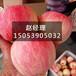 山東臨沂紅富士蘋果批發價格低至0.6元