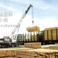 济南木材进口代理报关公司