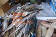 马来西亚海鲜进口代理报关行