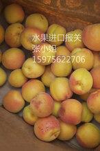 新鲜新鲜杏子水果进口要通过哪些许可