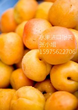 上海机场进口水果报关公司