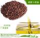 供應胡蘿卜籽油胡蘿卜油天然物理壓榨萃取