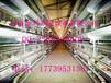 蛋鸡养殖设备阶梯式四层五门蛋鸡笼镀锌鸡笼养鸡设备全自动鸡笼子