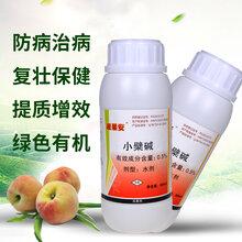 西红柿青枯病专用杀菌剂大蒜油厂家贵州图片