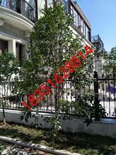 苏州私家庭院绿化、庭院苗木景观设计、石榴树,苏州企业绿化工程、苏州花园小区绿化