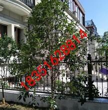 别墅庭院绿化工程、别墅果树苗木、造型树古桩盆景基地,苏州花木苗木市场