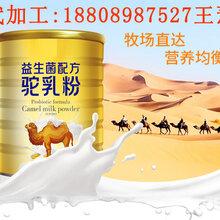 益生菌骆驼粉ODM生产/燕窝饮品代工图片