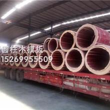 甘肃圆木模板厂家,供应各种木圆模,圆柱子模具,弧形木模板图片