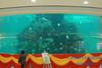 宁波鱼缸厂家承接大型亚克力景观鱼缸工程生产超厚有机玻璃板材