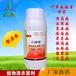 番茄疫病专用药靓果安杀菌营养生物制剂,有机农药特效药