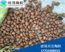 湖南陶粒株洲陶粒廠頁巖黏土為原料強度高